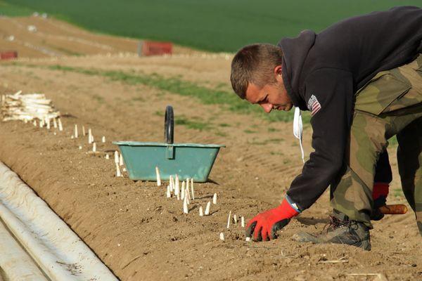 Benoît Wiart, producteur d'asperges dans l'Aisne espère pouvoir écouler son stock grâce à la grande distribution.
