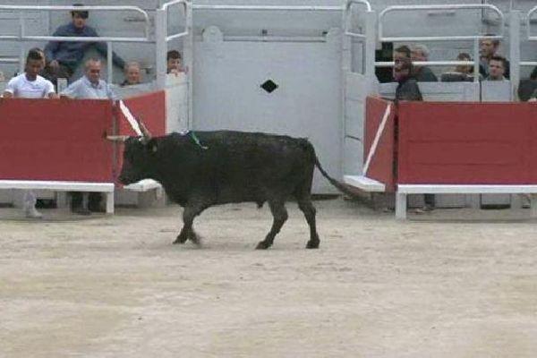 Feria d'Arles : pro et anticorrida ont prévu de manifester ce samedi.
