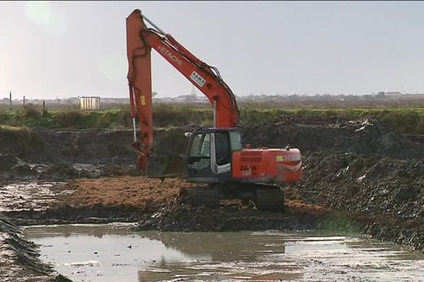 Réhabilitation des marais sur l'île de Ré