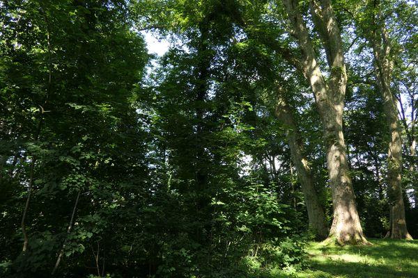 Les platanes  ont été planté au 18eme siècle.