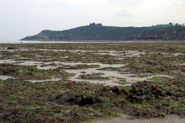 Photo d'algues vertes échouées sur la plage de Plouha réalisée le 06 mai 2011