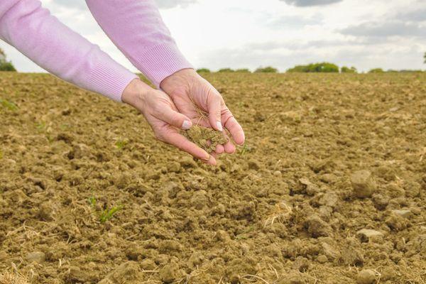 La sécheresse est de plus en plus récurrente chaque été, dans certains départements bretons.