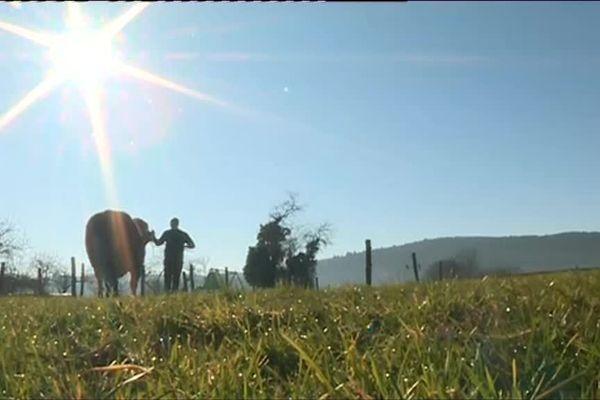Minus et Jeremy espèrent bien briller lors du concours général agricole jeudi 28 mars.