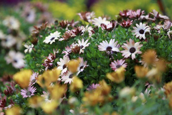 Le 1er festival des jardins dans les Alpes-Maritimes se déroule du 1er avril au 1er mai 2017