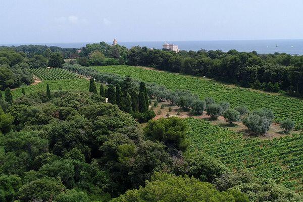 La mer, le monastère et les vignes.