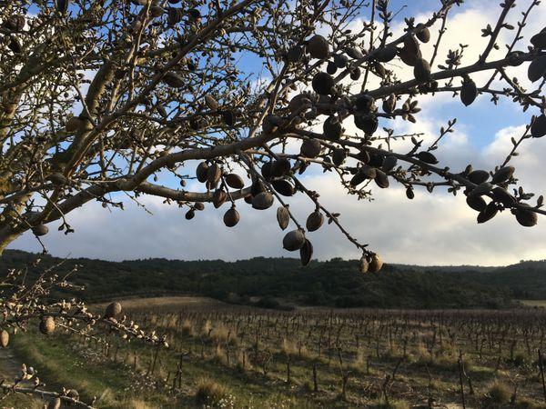 Découverte sur les vignes Corbières audoises