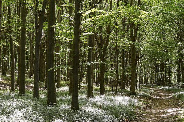 À l'intérieur de la forêt domaniale de Tournehem.