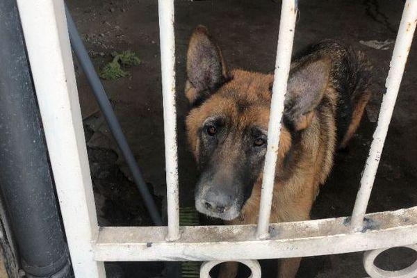 La chienne Malika vit en permanence dans une cage d'escalier
