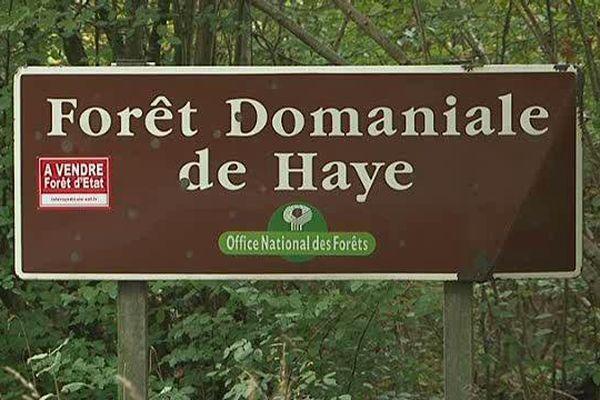 C'est juste pour la photo. La Forêt de Haye n'est (pour l'instant) pas à vendre.