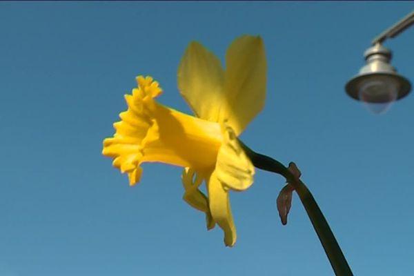 Les premières fleurs apparaissent déjà, donnant l'envie aux jardinier de se mettre au travail