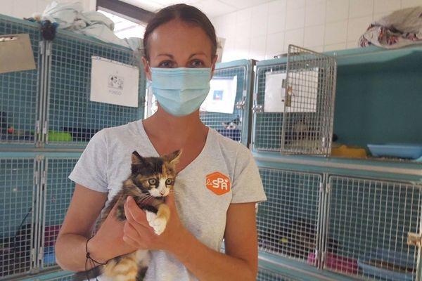 Les chatons sont très nombreux à la SPA de Rennes en cette fin juillet en raison de la non-stérilisation des félins adultes durant le confinement.