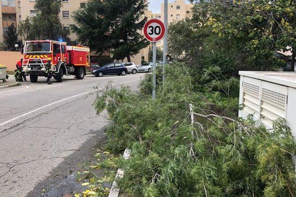 Des arbres tombés sur les routes d'Ajaccio.