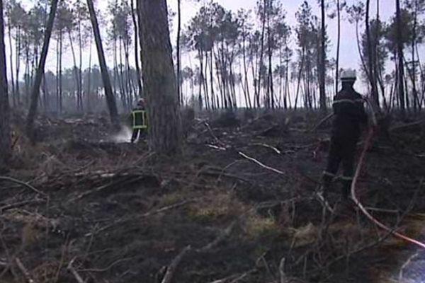 L'incendie a ravagé plus de 200 hectares dans la forêt landaise
