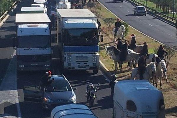 Pendant plus d'une heure, les professionnels de la filière équine ont bloqué l'autoroute A9