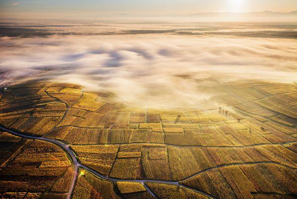 La route des vins.