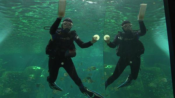 C'est le grand nettoyage, y compris de l'intérieur des aquariums, pour la réouverture mercredi 19 mai.