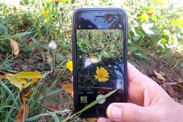 Pl@ntNet, l'appli montpelliéraine qui permet d'identifier les plantes et les fleurs sauvages, récompensée par l'Académie des sciences