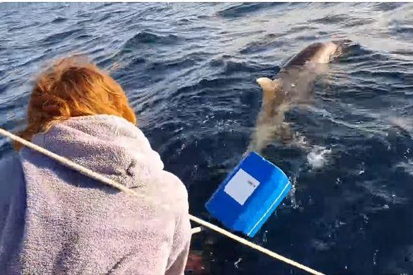 """""""Le sauvetage d'un dauphin accidentellement pris dans le corps-mort d'une bouée restera pour moi une expérience inoubliable"""", Nicolas Raffi."""