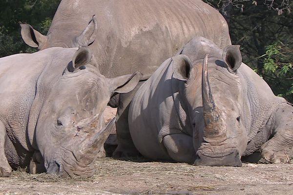 La zoo de Montpellier, dans l'Hérault, abrite près de 300 espèces.