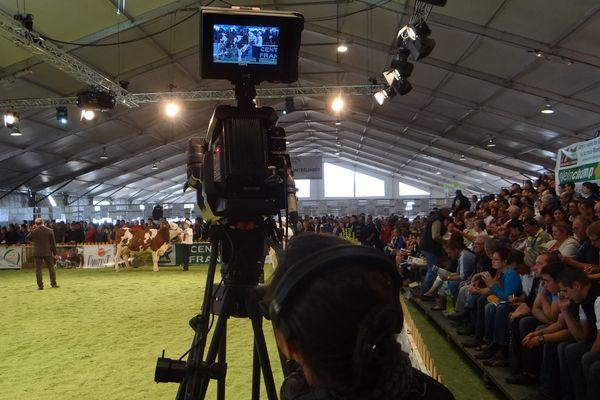 Dans la boîte : le concours national de la race Montbéliarde jeudi matin dans le hall 2.