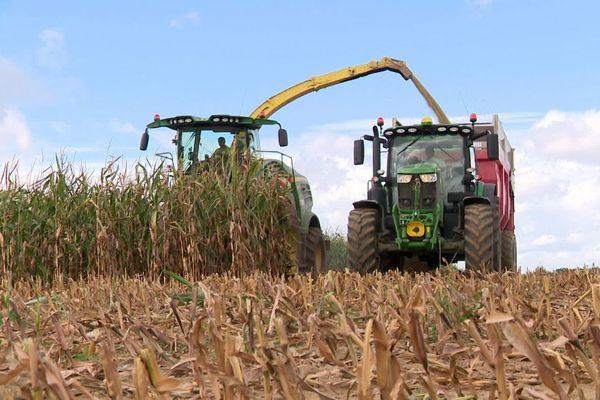 La récolte du maïs dans l'Yonne