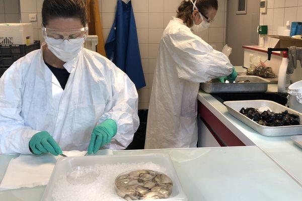 Au centre Atlantique de l'Ifremer : dissection des mollusques prélevés sur les trois façades maritimes françaises avant d'analyser leurs tissus pour savoir s'ils sont porteurs de traces du SARS-CoV-2. - avril 2020.