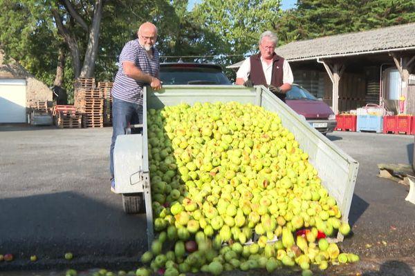 600 tonnes de pommes ont été récoltées cette année à la cidrerie Nicol, à Surzur. C'est 200 tonnes de moins par rapport à l'année dernière, la faute aux mauvaises conditions climatiques cette année.