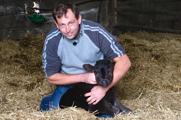 La race bovine Wagyu s'installe dans les Deux-Sèvres