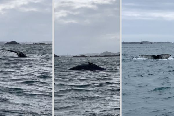 Une baleine dans la baie de Paimpol