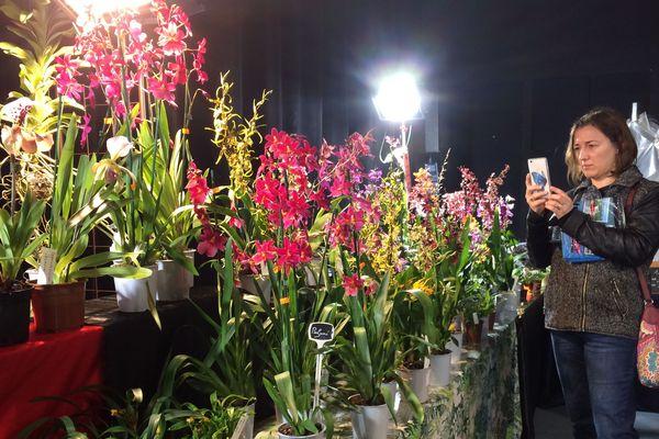 Dans le monde, on dénombre environ 25 000 espèces d'orchidées et un peu plus de 100 000 variétés.