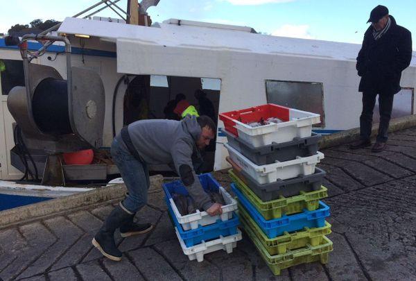 Déchargement de la pêche à Audierne (Finistère)