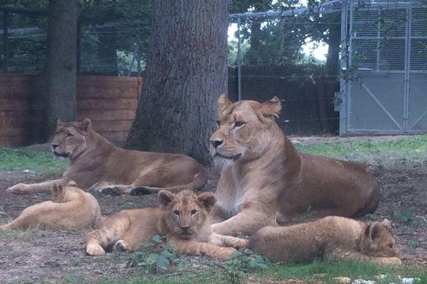Koumba, Kayla et Kassaï avec leur mère.