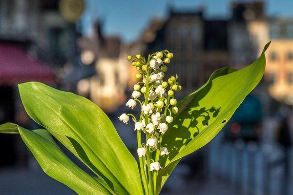 Pourquoi le muguet est-il considéré comme un porte-bonheur ? Quel lien y a-t-il entre cette fleur et la fête du travail ?