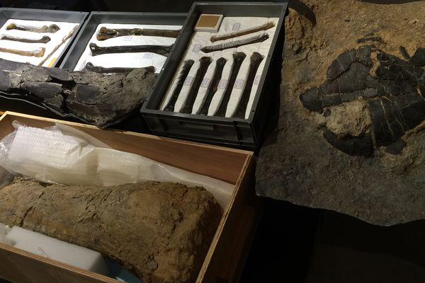 Les ossements de dinosaures découverts sur le site paléontologique d'Angeac ont été remis au musée d'Angoulême.