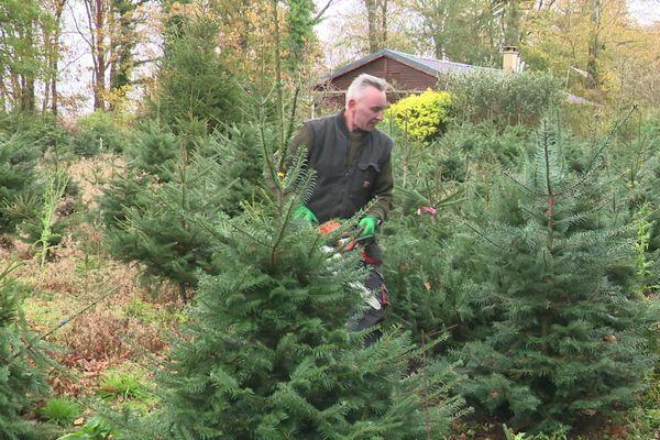 Ce producteur de sapins de Noël, près de Fécamp, sait déjà qu'il n'écoulera pas ses 3000 arbres.