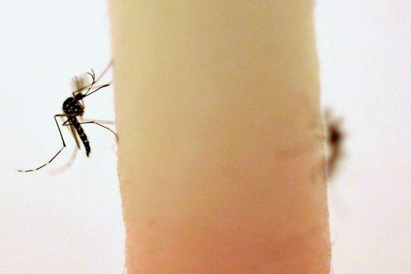 Un cas autochtone suspecté dans l'Hérault et le Gard — Dengue