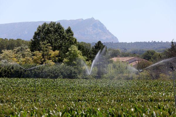 Au pied de la Sainte-Victoire, les agriculteurs irriguent leurs exploitations grâce à l'eau du canal de Provence