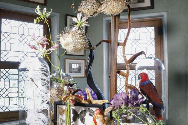 Un cabinet de curiosité conçu par l'atelier floral du château de Chenonceau