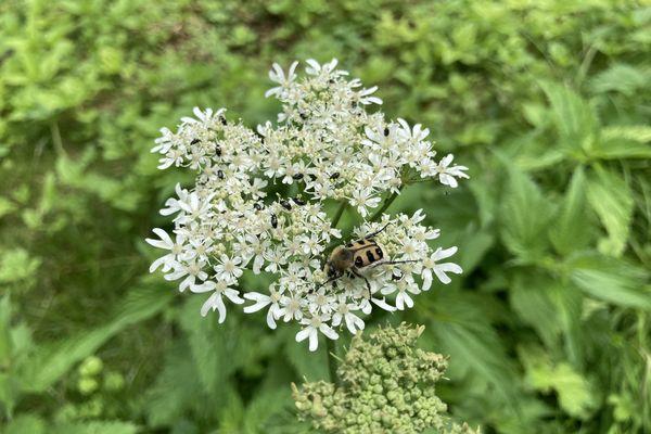 La faune et la flore de la voie des Viennes sont actuellement scrutées