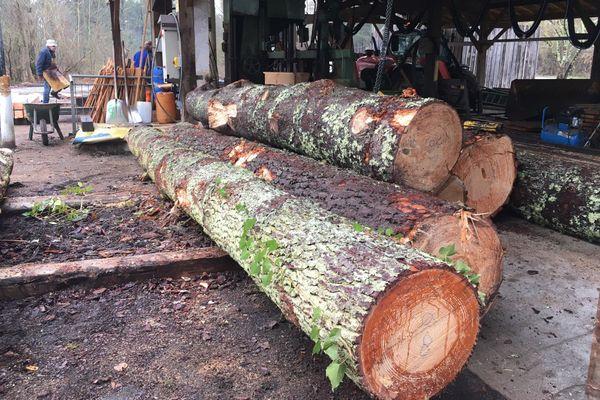 La forêt est accessible aux riverains qui peuvent profiter gratuitement de bois de chauffage mais aussi de bois de construction grâce à une nouvelle scierie.