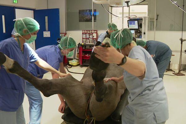 L'école vétérinaire de Marcy-l'Etoile dans le Rhône accueille 1.500 équidés chaque année.