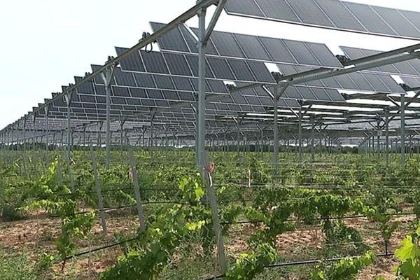 Des panneaux photovoltaïques qui fonctionnent comme des persiennes pour protéger la vigne