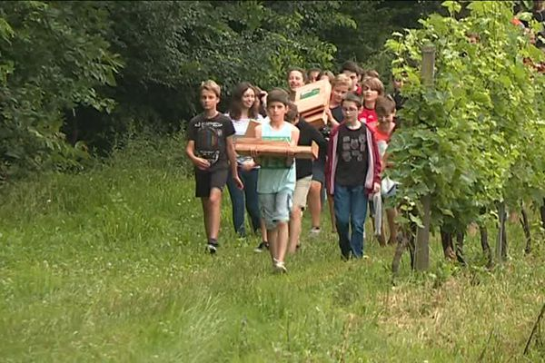 Les collégiens apportent leurs nichoirs dans les vignobles du Bergeracois.