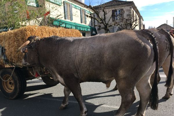 La fête des Boeufs gras est une tradition dans le sud Gironde.