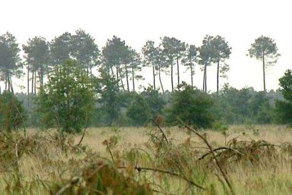 La forêt des Lande clairsemée, telle qu'elle était avant la plantation massive des pins