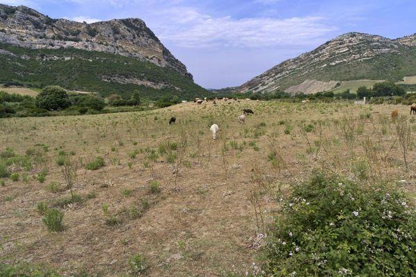 Le procureur de la République de Bastia a ouvert une enquête préliminaire pour des fraudes présumées aux aides agricoles dans une exploitation de Haute-Corse.