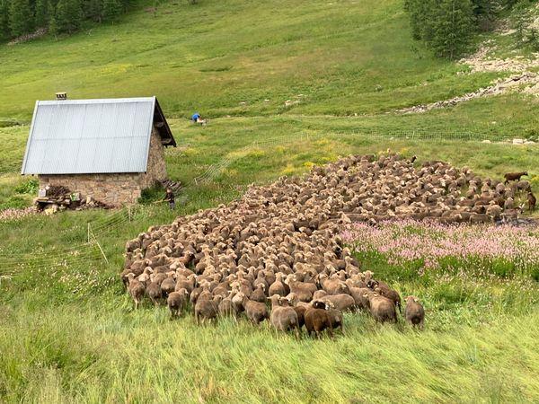 Thomas est parfois aidé par son fils Mathieu de 8 ans pour s'occuper du troupeau.