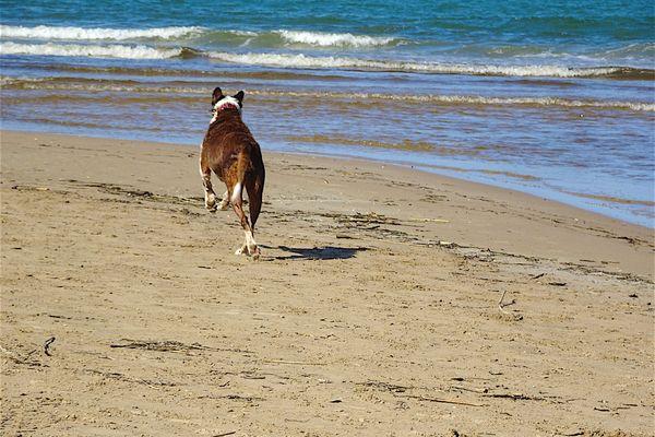 Le label Toutourisme permet de connaître les espaces les plus adaptés à la présence canine dans un lieu de vacances.