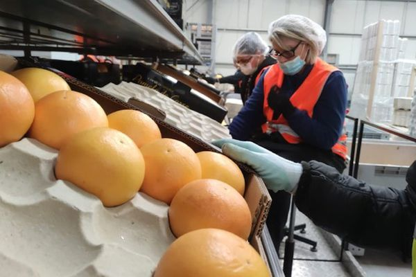 La production de pomelos en France métropolitaine est essentiellement assurée en Corse.