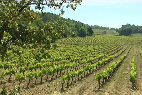 Paysage entre forêt et vigne, près d'Entrecasteaux, dans le centre du Var.